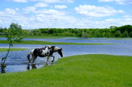 Horses drinking on the water place Stockfoto