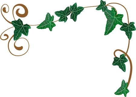 ivies: Illustrazione vettoriale di telaio da edera