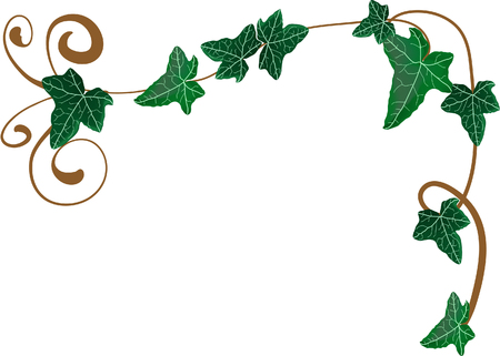 ivies: Vector illustration of frame from ivy Illustration