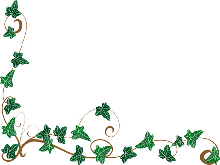 leaves border: Corner from ivy Illustration