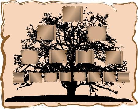 genealogical: Vector ejemplo de �rbol geneal�gico