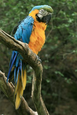 Yellow parrot on the branch Stock Photo - 3468059