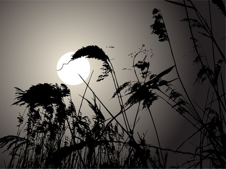 Early morning in the rushes Vector