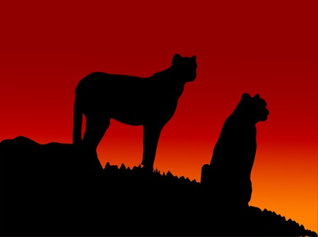 Two cats in the sunset Vector