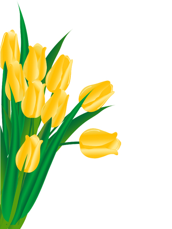 Bouquet of yellow tulips - vector illustration Vector