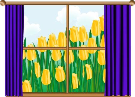 Yellow tulips behind the window Vector