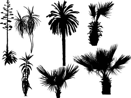 Palm trees - vector illustration collection