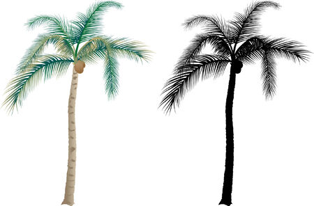 palm tree vector: Tropical palm trees - vector illustration