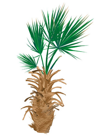 Vector illustration of the palm tree Illustration