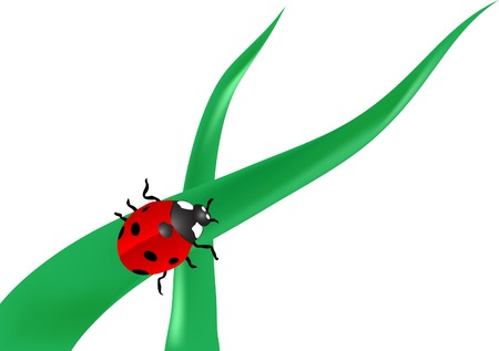 Vector illustration of the ladybird Vector