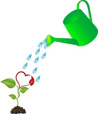 regando el jardin: Regadera y la planta de coraz�n