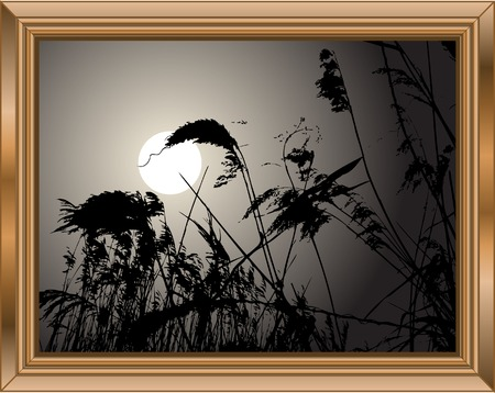 rushes: Wooden frame with rushes in sunset Illustration