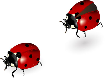 feeler: Vector illustration of the ladybird in motion