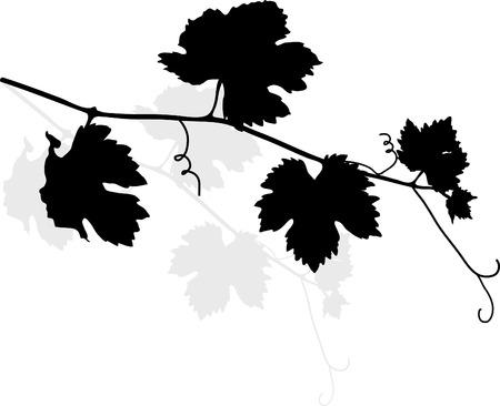 Black vine leaves - vector illustration