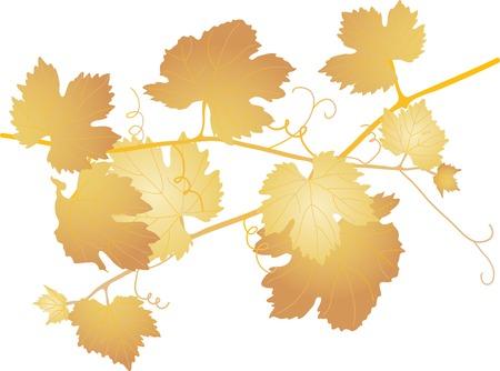 Brown vine leaves - vector illustration Vector