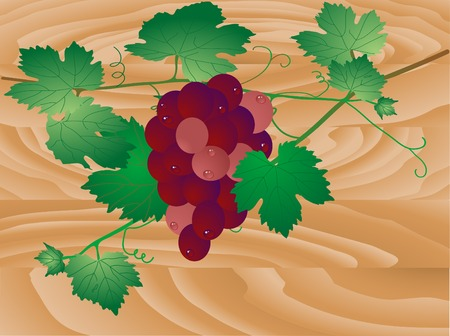 Bunch of grapes with water drops Stock Vector - 5539225