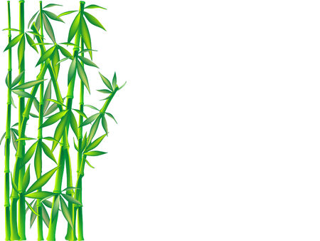 Vecteur de bambou vert - illustration vectorielle Vecteurs