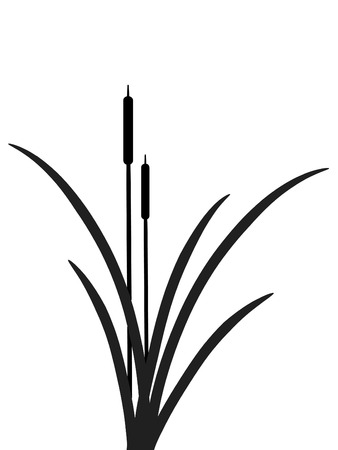 bulrush: Vector illustration of black reed