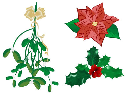 Christmas mistletoe and holly - vector illustration Vector