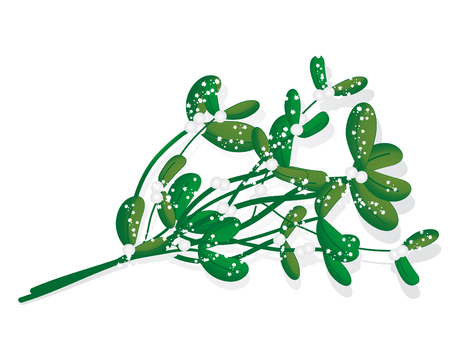 Snowy green mistletoe - vector illustration Vector