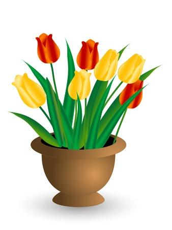 tulips in green grass: Tulips in the flower pot - illustration