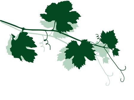 grapevine: Green silhouette of vine leaves Illustration