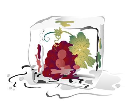 frozen fruit: Grapes frozen in ice cube Illustration