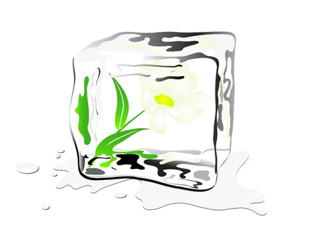 ice cube: Daisy frozen in ice cube Illustration