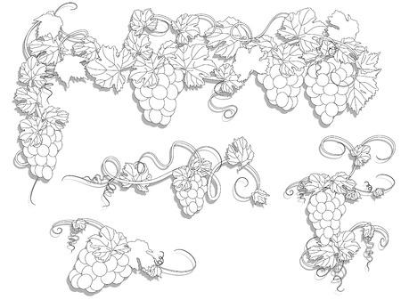 hojas parra: Elementos de dise�o con hojas de vid y uvas Vectores