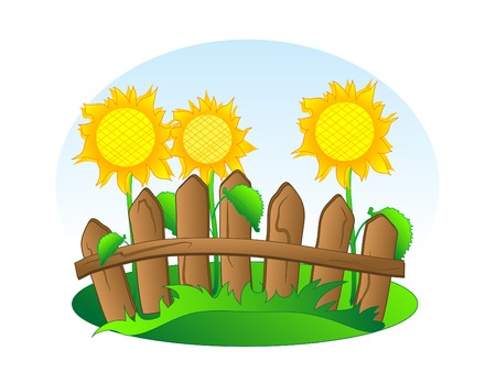 Sunflowers behind the wooden fence Vector