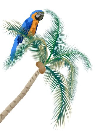 Big parrot sitting on a palm tree Vector