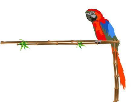 tropical border: Red parrot sitting on a bamboo frame