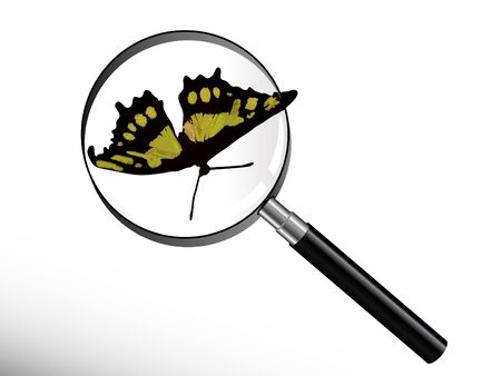 Green butterfly under magnifying glass Stock Vector - 9567263