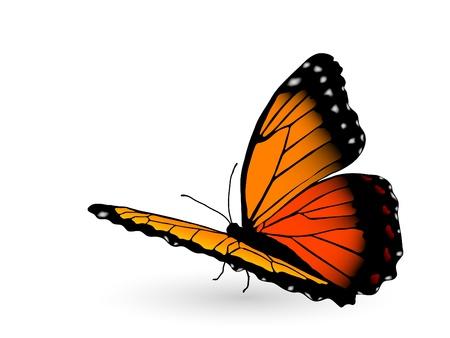 Beautiful orange butterfly on white background Ilustracja