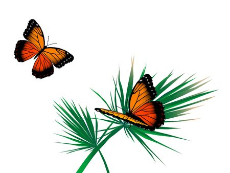 Two orange butterflies on the palm leaf Stock Vector - 9567262