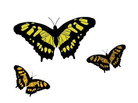 Beautiful  butterflies on white background Stock Vector - 9843517
