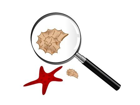 Seashells and starfish under magnifying glass Stock Vector - 9843527