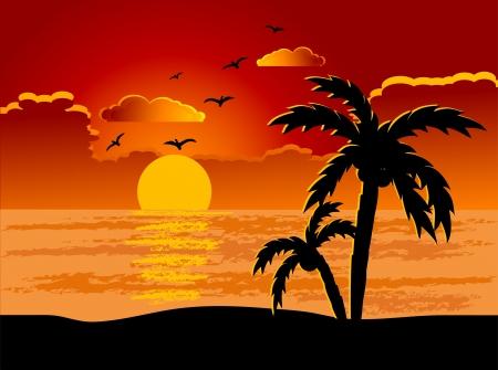 coucher de soleil: Palm treess sur la plage.