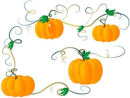 pumpkin border: Pumpkin design elements - vector illustration