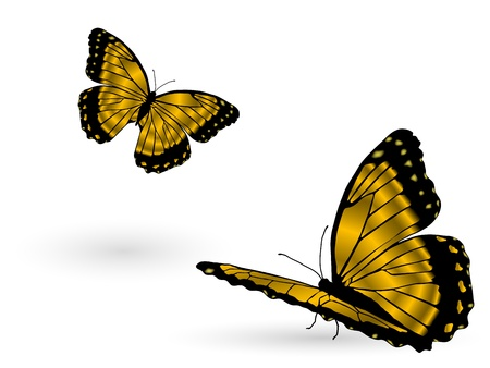 exotic butterflies: Hermosas mariposas de oro sobre fondo blanco