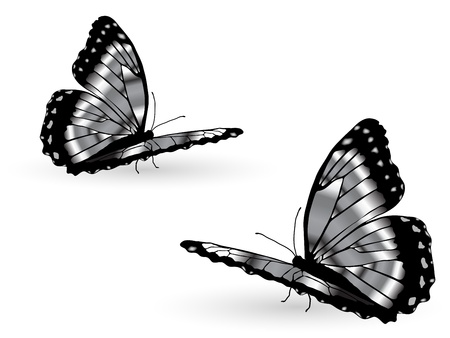 exotic butterflies: Beautiful silver butterflies on white background Illustration