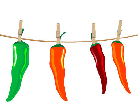 Red, green and orange chilli peppers on the rope Stock Vector - 12802061
