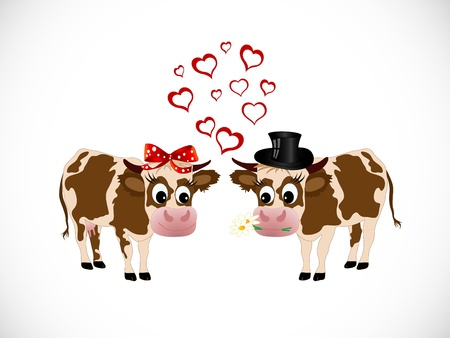 lady cow: Two cows in love - she and he - on white background Illustration