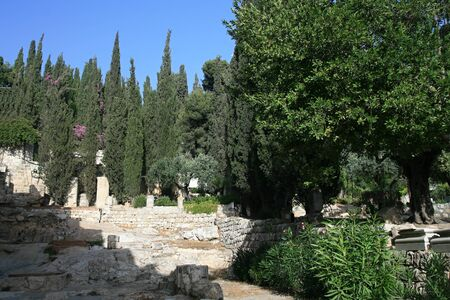 Olive trees in Garden of Gethsemane, Jerusalem Stock Photo - 17422758