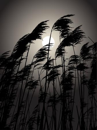 volle maan: Volle maan in de biezen