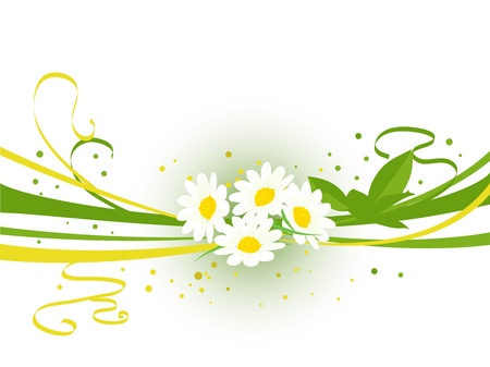 Spring background with camomile flowers