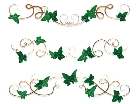 Vector illustration of borders with ivy leaves