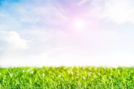 Green lawn with blue sky.  Spring landscape in sunny day. Stock fotó