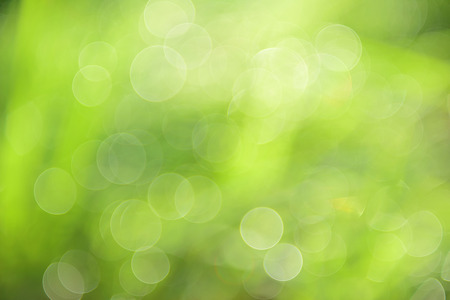 abstract background green bokeh photo