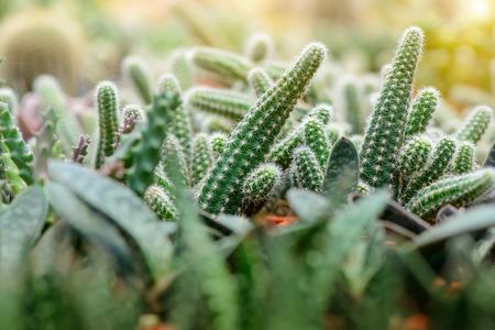 to thrive: cactus